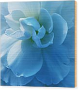 Blue Begonia Flower Wood Print by Jennie Marie Schell