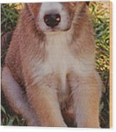 Blue Eyed Pup Wood Print by Dennis Nadeau