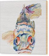 Blue Fish   Wood Print by Pat Saunders-White