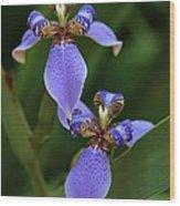 Blue Walking Iris Wood Print by Carol Groenen