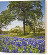 Bluebonnet Meadow Wood Print by Inge Johnsson