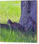 Bobcat Cubs Wood Print by Diana Berkofsky
