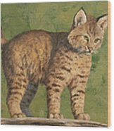 Bobcat Kitten Wood Print by Crista Forest