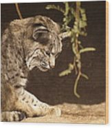Bobcat Wood Print by James Peterson