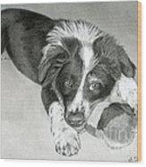Border Collie Puppy Wood Print by Sarah Batalka