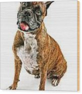 Boxer Dog Looking Forward Wood Print by Susan Schmitz