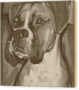 Boxer Dog Sepia Print Wood Print by Robyn Saunders