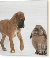 Boxer Puppy With Lionhead-lop Rabbit Wood Print by Mark Taylor