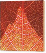 Bright And Dark Wood Print by Heiko Koehrer-Wagner