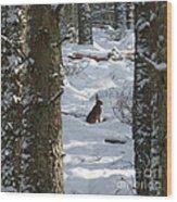 Brown Hare - Snow Wood Wood Print by Phil Banks