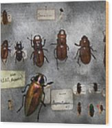 Bug Collector - The Insect Collection  Wood Print by Mike Savad