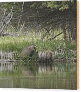 Busy Beaver Wood Print by Charles Warren