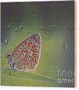 Butterfly Wood Print by Diana Kraleva