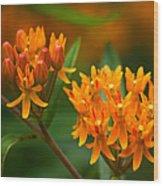 Butterfly Milkweed Wood Print by Adam Romanowicz