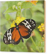 Butterfly Wings Wood Print by Anne Gilbert