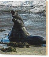 California - Elephant Seals Of Big Sur 006 Wood Print by Lance Vaughn
