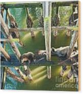 California Sealions Under The Santa Cruz Pier Wood Print by Artist and Photographer Laura Wrede