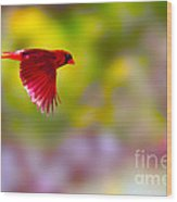 Cardinal In Flight Wood Print by Dan Friend