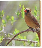 Cardinal In Spring Wood Print by Sandi OReilly