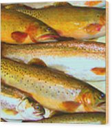 Catch Of The Day - Painterly - V2 Wood Print by Wingsdomain Art and Photography