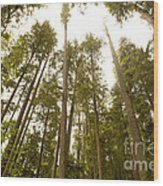 Cathedral Forest Wood Print by Artist and Photographer Laura Wrede