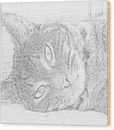 Cat's Eye Wood Print by J D Owen