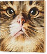 Cat's Perception Wood Print by Lourry Legarde