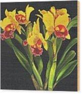 Cattleya Orchid Wood Print by Richard Harpum