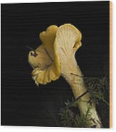 Chanterelle Mushroom Wood Print by Angie Vogel