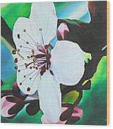 Cherry Blosom Wood Print by Joshua Morton