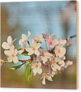 Cherry Blossoms 2013 - 073 Wood Print by Metro DC Photography