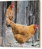 Chickens At The Barn Wood Print by Edward Fielding