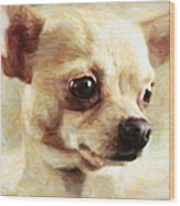 Chihuahua Dog - Painterly Wood Print by Wingsdomain Art and Photography