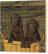 Chocolate Labrador Retriever Pups Wood Print by Linda Freshwaters Arndt