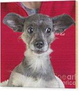Christmas Dog Wood Print by Edward Fielding