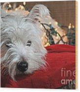 Christmas Westie Wood Print by Catherine Reusch  Daley