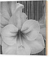 Classic Lilies Wood Print by Greg Patzer