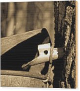 Closeup Of A Maple Tap Wood Print by Edward Fielding