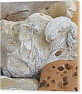 Coastal Shell Fossil Art Prints Rocks Beach Wood Print by Baslee Troutman
