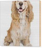 Cocker Spaniel Dog Isolated On White Wood Print by Susan Schmitz