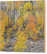 Colorful Autumn Forest In The Canyon Of Cottonwood Pass Wood Print by James BO  Insogna