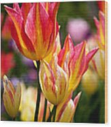Colorful Tulips Wood Print by Rona Black