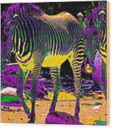 Colourful Zebras  Wood Print by Aidan Moran