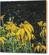 Coneflowers Echinacea Yellow Painted Wood Print by Rich Franco