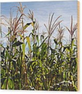 Corn Production Wood Print by Carlos Caetano
