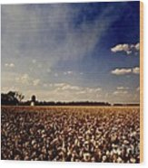 Cotton Field Wood Print by Scott Pellegrin