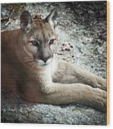 Cougar Country Wood Print by Karen Wiles