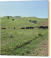 Cows Along The Rolling Hills Landscape Of The Black Diamond Mines In Antioch California 5d22346 Wood Print by Wingsdomain Art and Photography