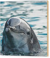 Curious Dolphin Wood Print by Mariola Bitner
