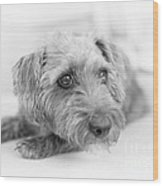 Cute Pup On Watch Wood Print by Natalie Kinnear